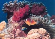 Aquastars Diving Centers & Safaris (Hurghada, Palma De Mirette)