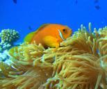 TGI Diving Alimatha