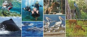 Epic Encounters Dive & Adventure Centre