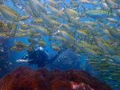 Dive Point Samui (Paradise Beach Resort)