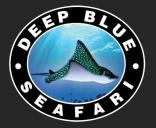 Deep Blue Dive Seafari