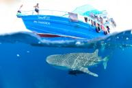 Thai Sea Liveaboard