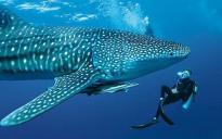 Reef Conservation International (ReefCI)
