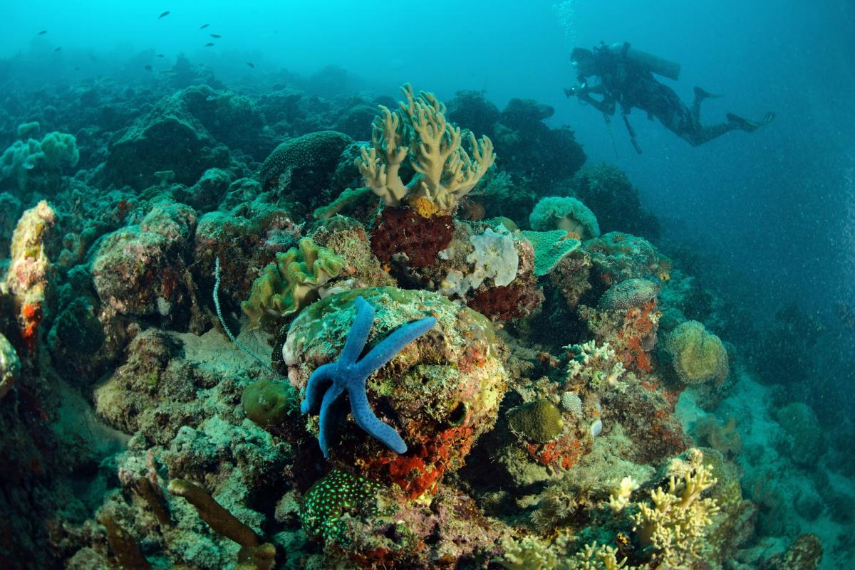 snorkeling and scuba diving essay