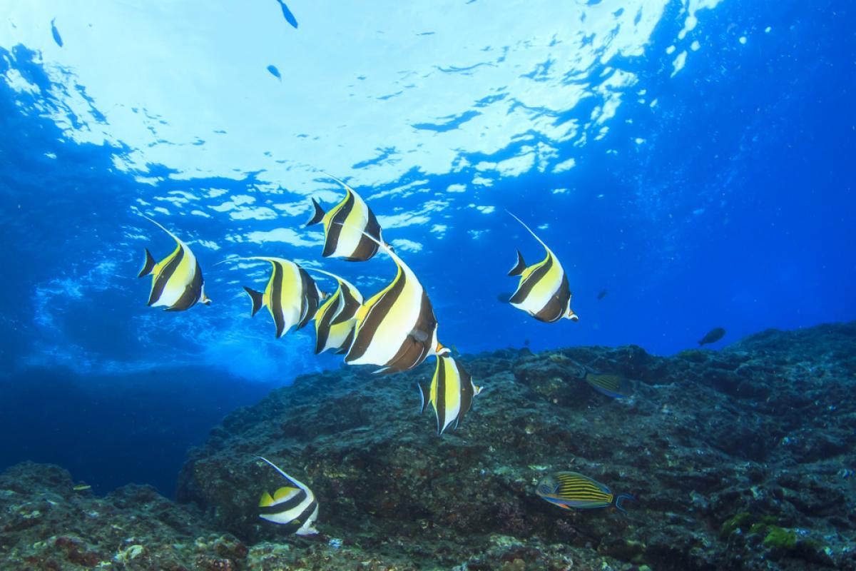 marine life seychelles and scuba diving essay