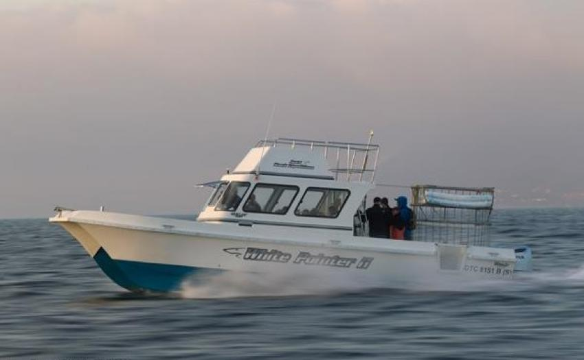 Apex Shark Expeditions, Cape Town, South Africa ...