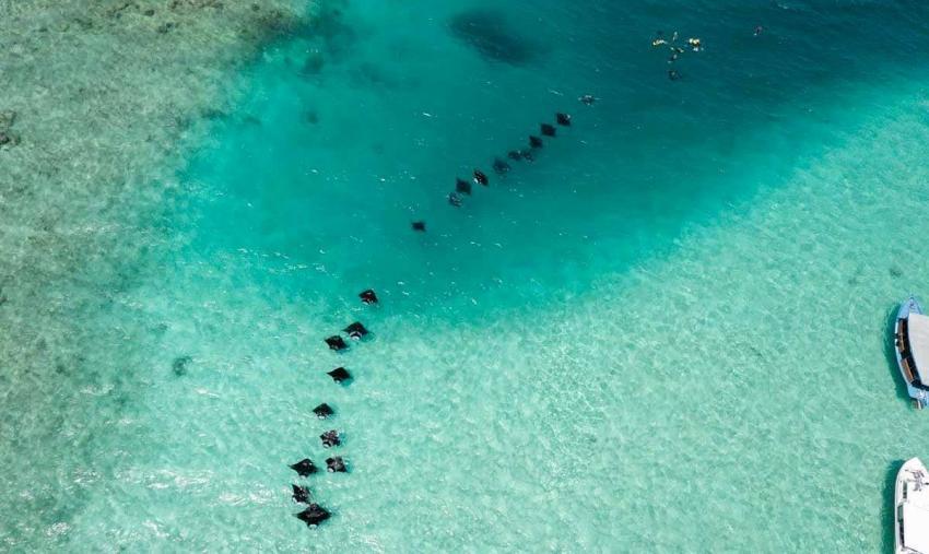 Maldives liveaboard diving | Maldives liveaboards